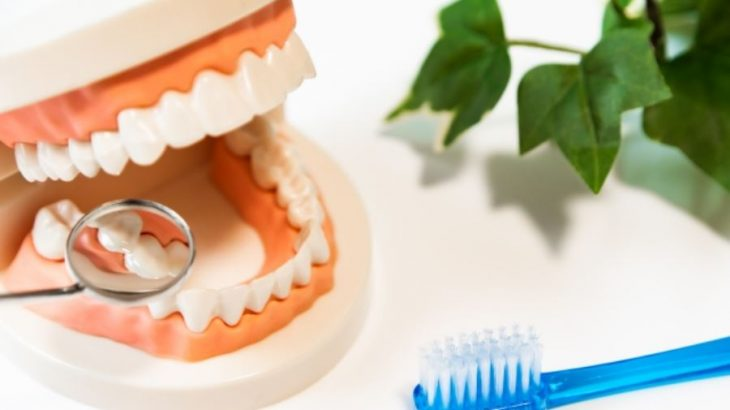 歯周病でも矯正治療は可能? 治療時の危険性や気を付けるべきこと